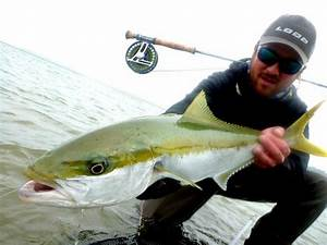 11 best images about AMBERJACK on Pinterest | Nice, The ...