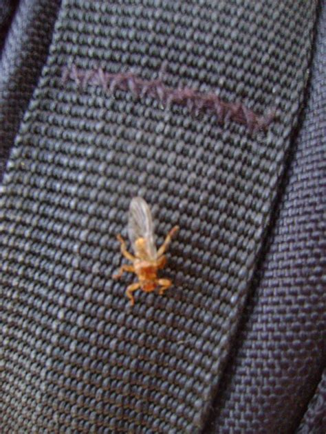 ist das fuer ein tier fliegendes spinnenartiges insekt