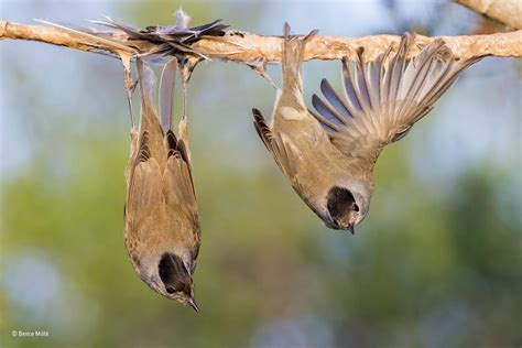 obyavleny pobediteli konkursa wildlife photographer