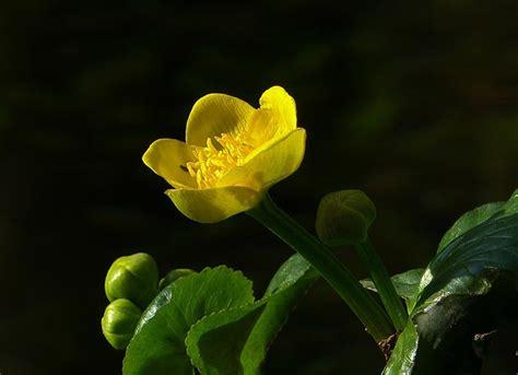 fiori di bach e ansia fiori di bach per ansia funzionano davvero