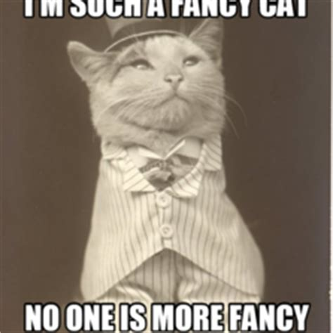 Fancy Cat Meme - i m such a fancy cat no one is more fancy memes com