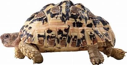Turtle Transparent Slider