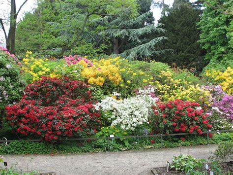 Bibliothek Botanischer Garten Bern öffnungszeiten by Beginn Des Sekund 228 Ren Dickenwachstums Bei Rhododendron Spec
