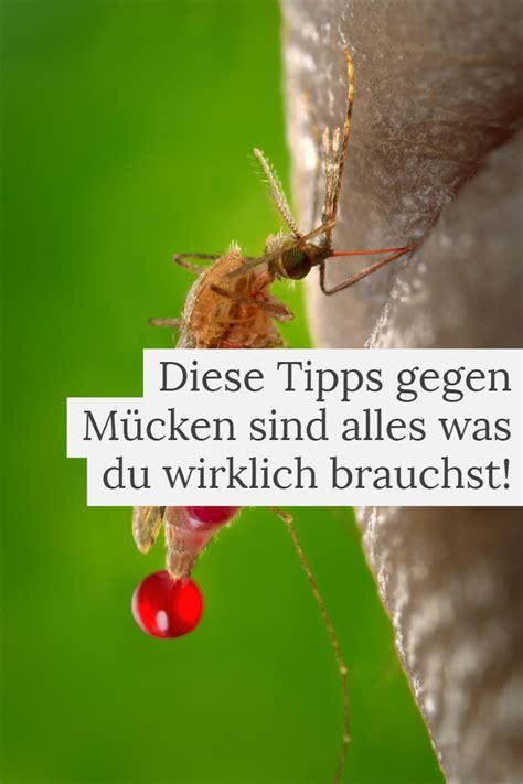 Tipps Gegen Mücken by Tipps Gegen M 252 Ckenstiche Das Inspirations Magazin
