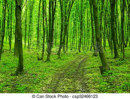 Free Green Forest Background by Green Forest Background