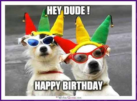 funny birthday dog picture happy birthday pictures