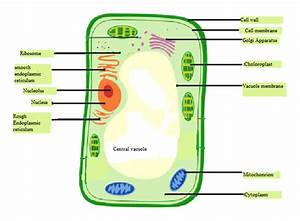 30 Label The Parts Of The Cell Membrane