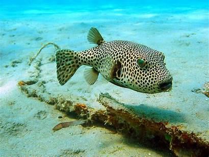 Sealife Underwater Ocean Sea Fishes Nature Fish
