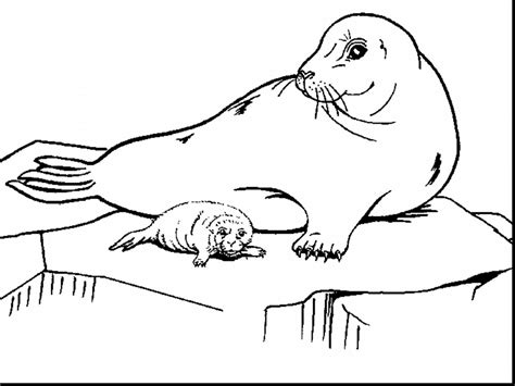 Leopard Seal Coloring Pages 8886