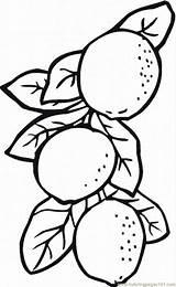 Lemon Coloring Pages Lemons Printable Limes Drawing Fruits Slice Tree Lemonade Template Coloringpages101 Templates Sketch sketch template
