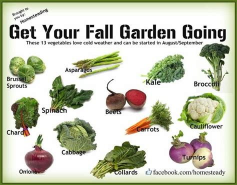 1000 ideas about fall vegetable gardening on