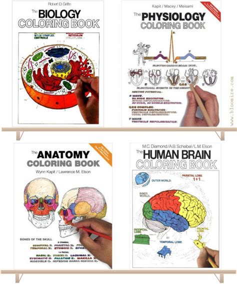 anatomy  physiology colouring book  bloomize