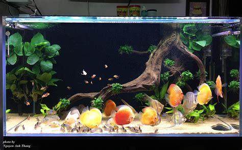 pin  denis istomin  discus discus aquarium aquarium