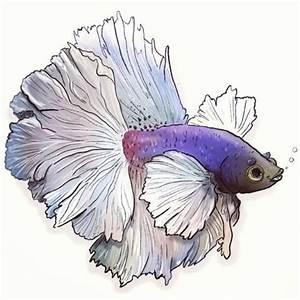 The 25+ best Koi fish drawing ideas on Pinterest | Koi ...