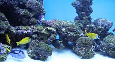 put  rock  saltwater aquariums