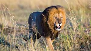 Holidays in Africa | Visit Africa | Africa Holiday Package