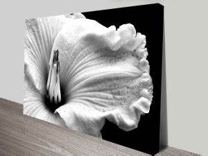 Black And White Flower Art Prints | www.pixshark.com ...