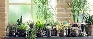 Zimmerpflanzen Sonniger Standort : die acht h ufigsten probleme bei zimmerpflanzen und was du dagegen tun kannst ~ Whattoseeinmadrid.com Haus und Dekorationen