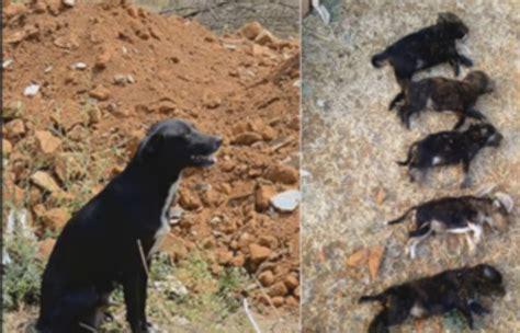 Bengaluru woman kill 8 puppies to teach stray dog a