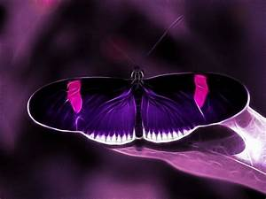 unique butterfly photos | Purple passion in the moonlight ...