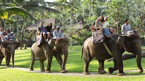 bali elephant ride offers bali elephant safari bali