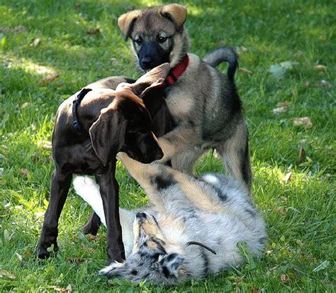 Spiele Für Hunde Im Garten