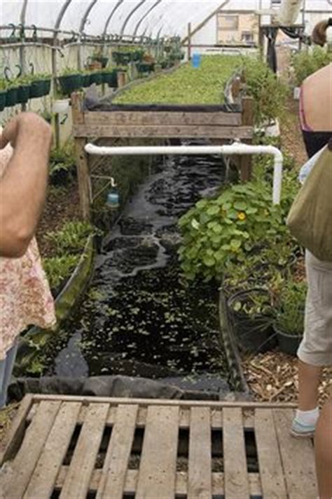 1000 images about aquaponics hawaii on