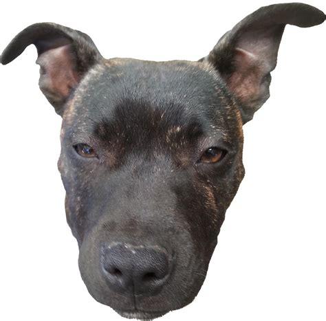 Doge Png Transparent Images Png All