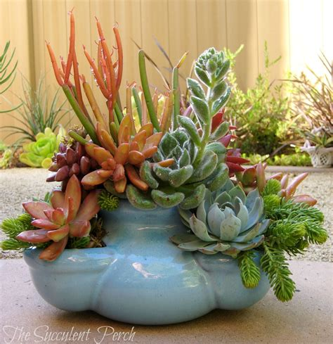 succulents in a pot and pudgy strawberry pot planted by davison of the succulent perch succulent