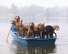 Row Row Your Boat German by Pup Time By Catcher In My Eye Via Flickr Http