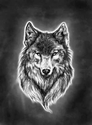 Download Wolf Head Wallpaper Gallery