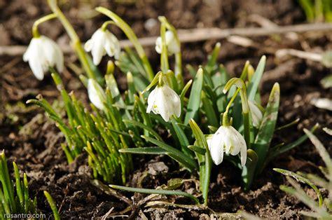 Meitenes! Pavasaris ir klāt!