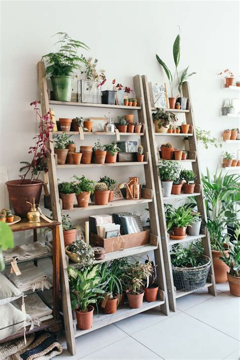 Decorating Ideas For Kitchen Plant Shelves by Best 25 Plant Shelves Ideas On Plant Ladder