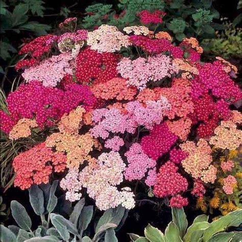 Mehrjährige Blumen Die Den Ganzen Sommer Blühen by Schlichte Mehrj 228 Hrige Blumen Die Den Ganzen Sommer