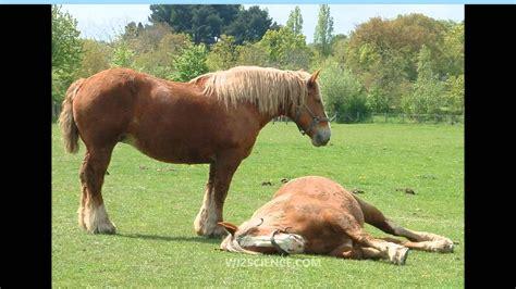 horse breton learning