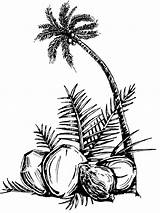 Coloring Coconut Pages Tree Palm Fruits Print Printable Comments Recommended Colors Coloringhome sketch template