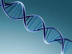 What Are We Made Of       Nucleic Acids
