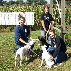dog walker39s weekend mike39s maze With weekend dog walker