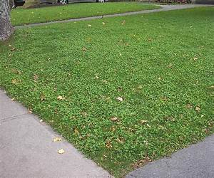 What Your Lawn and This North Korean Dictator Have in ...
