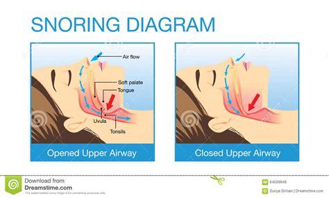 anatomy  human airway  snoring stock vector image