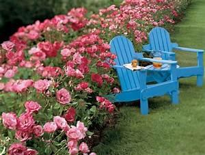 Quels Arbustes Pour Une Haie : 17 meilleures id es propos de arbuste pour haie sur ~ Premium-room.com Idées de Décoration