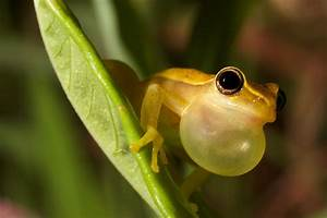 Jewels Of The Forest  The Fascinating World Of Tree Frogs