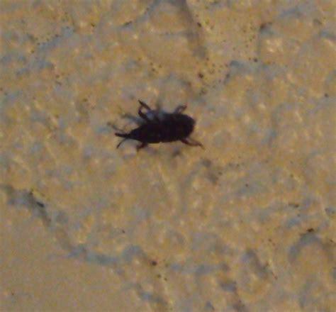 insectes dans la cuisine petit insecte noir qui pullule dans notre cave notre planete info