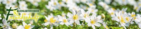 bundeskleingartengesetz verbotene pflanzen verbotene pflanzen im kleingarten kleingartenverein quot freundschaft quot e v bergen auf r 252
