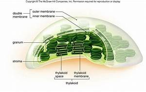 179 Best Photosynthesis Images On Pinterest