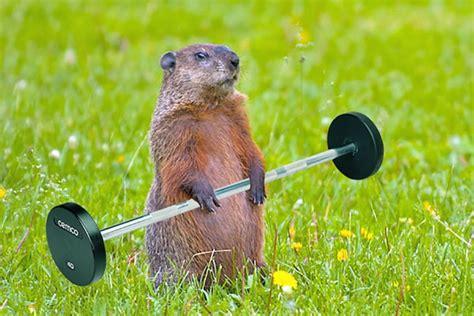 fitness spring groundhog groundhogs street take