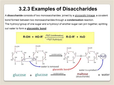 Topic 32 Carbohydrates, Lipids And Proteins  Ppt Video