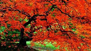 Autumn Tree Wallpapers - Wallpaper Cave