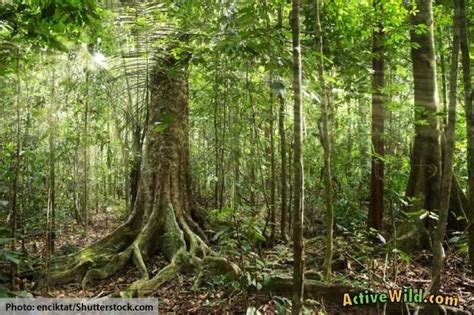 What Is A Tropical Rainforest? Definition, Location