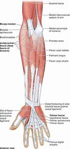 Forearm Fascial Compartment Syndromes